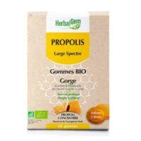 Herbalgem Propolis large spectre Gomme bio B/24 à MONTPEZAT-SOUS-BAUZON